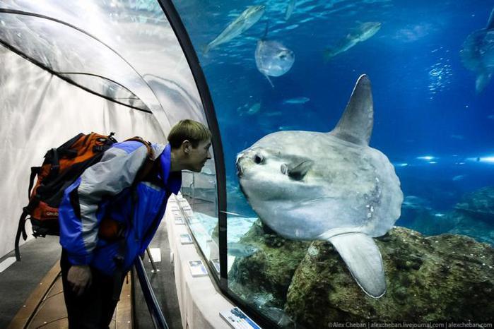 аквариум в барселоне 1 (700x466, 53Kb)