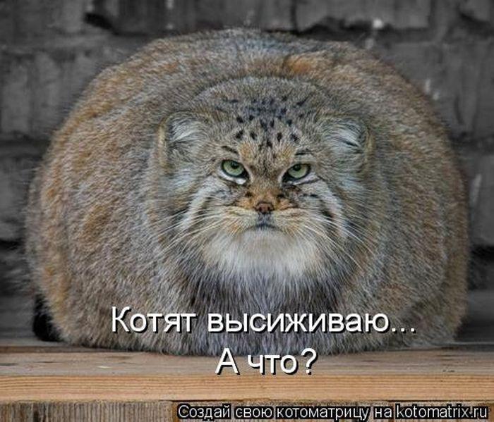 kotomatrix_04 (700x599, 80Kb)