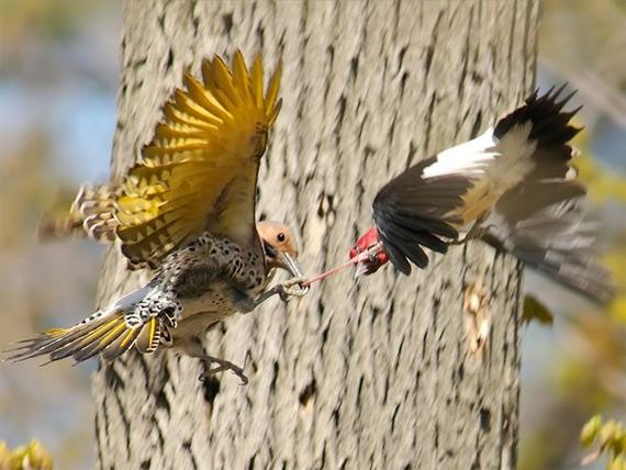 жизнь птиц12 (570x428, 87Kb)
