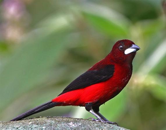 жизнь птиц18 (570x447, 57Kb)