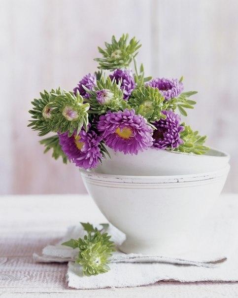 цветы-в-чашках-1 (483x604, 46Kb)