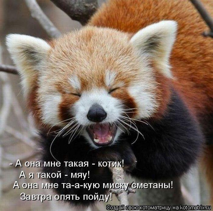 1325929328_kotomatrix_35 (700x696, 91Kb)