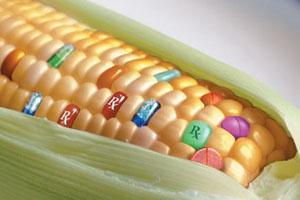 kukuruzaprez (300x200, 22Kb)