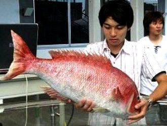 Цезий в японской рыбе (330x248, 21Kb)