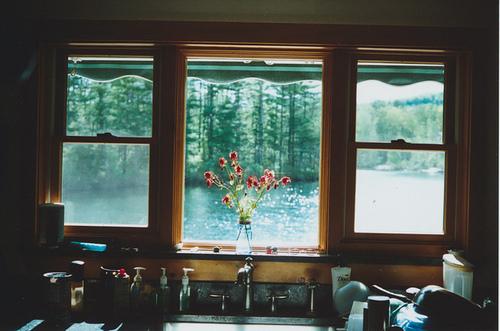 вид из окна,цветы,нежные фотографии (500x331, 100Kb)