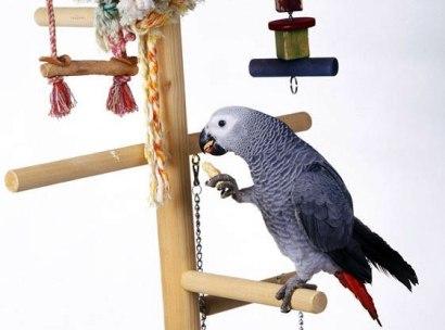 Попугаи - умницы (410x304, 23Kb)