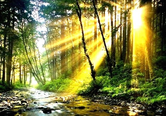Лесной ручей в солнечных лучах (636x446, 213Kb)
