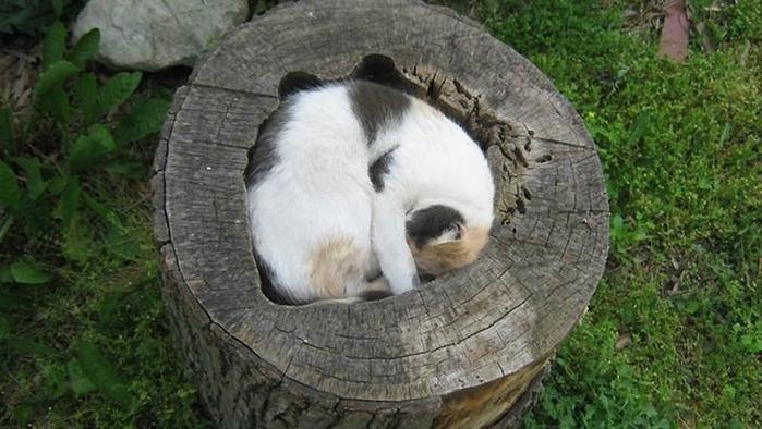 Фото подборка: идеальные места для отдыха – версия для котов