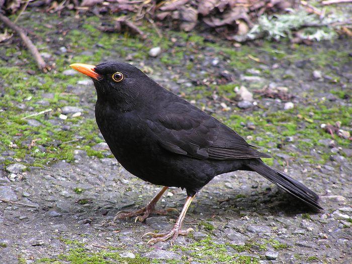 пение птиц слушать онлайн видео