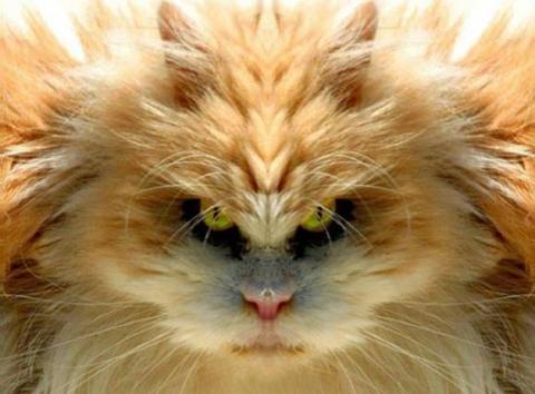 -кот (480x354, 27Kb)