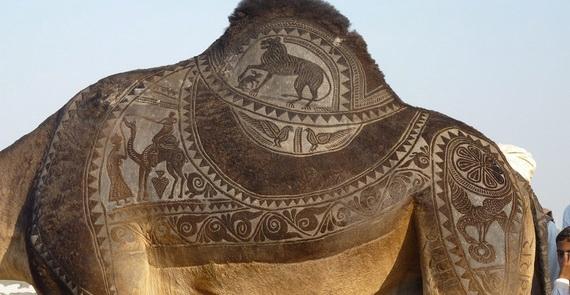 верблюд (570x295, 125Kb)