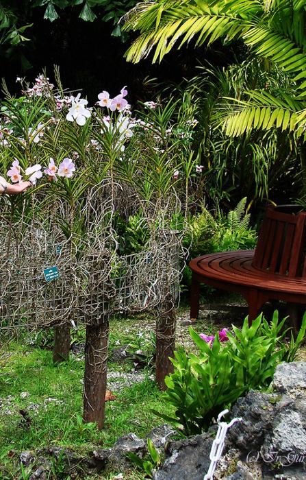 Орхидеи (447x700, 602Kb)