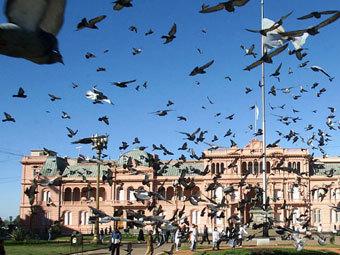 Аргентинские голуби (340x255, 37Kb)