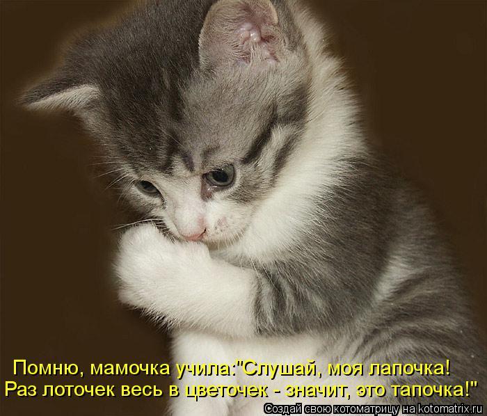 kotomatritsa_1f (700x598, 70Kb)