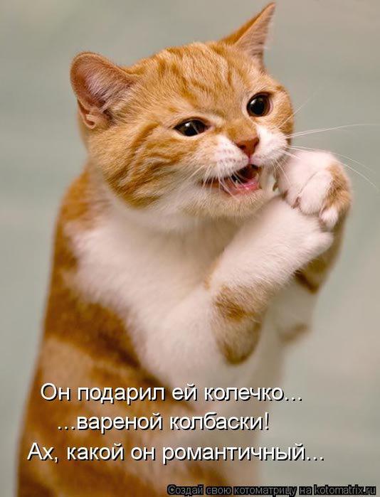 kotomatritsa_E (534x700, 45Kb)