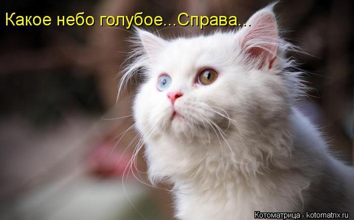 kotomatritsa_L (700x436, 35Kb)
