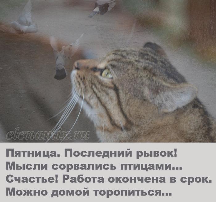 котэ мечтает/4348076_pyatnica5 (700x653, 116Kb)
