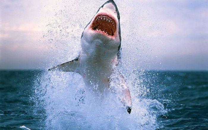 скачать игру злая акула