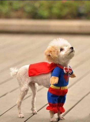 Вот он, спаситель мира!!! :)