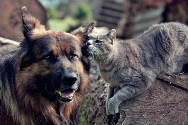animal friends 03 (640x427, 47Kb)