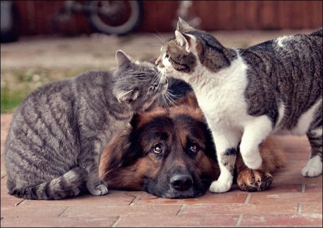 animal friends 05 (640x452, 48Kb)
