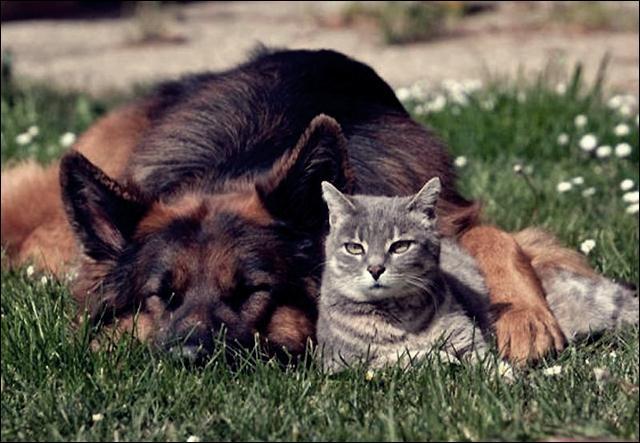 animal friends 09 (640x443, 54Kb)
