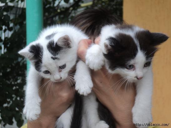 отдам котят в добрые руки Киев
