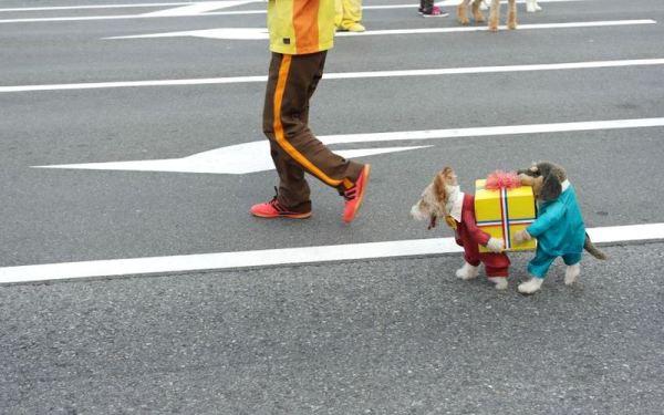 Костюмчик для собачки. jpg (600x375, 43Kb)
