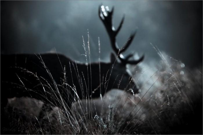 Сказочные фото-пейзажи от Nicolas LB 15 (700x467, 55Kb)