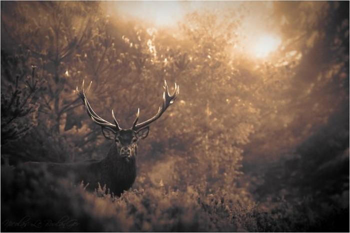 Сказочные фото-пейзажи от Nicolas LB 22 (700x467, 61Kb)