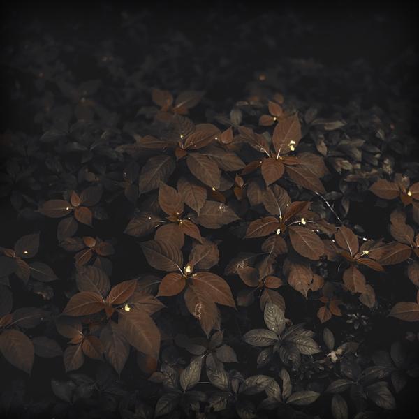 фотограф Юрген Хекель,немецкие фотографы,фото профессианальных фотографов (600x600, 233Kb)