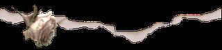 divider8 (320x73, 18Kb)