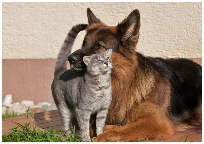 кошка с собакой фото  4 (700x493, 141Kb)