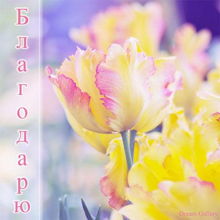 3303834_Spasibo_14 (450x450, 53Kb)