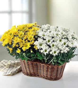 flowers-flowers2 (330x370, 39Kb)