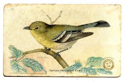birdGraphicFairy (400x261,  38Kb)