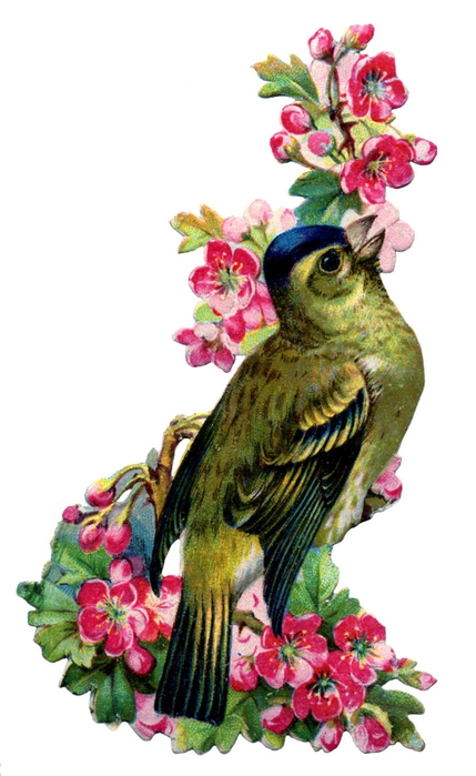birds and flowers vintage image graphicsfairy2b (429x700, 172Kb)