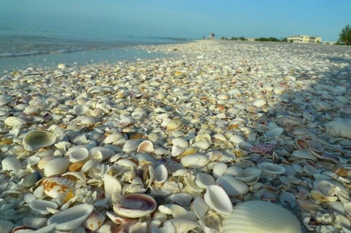 3925073_shellbeach2 (700x466, 110Kb)