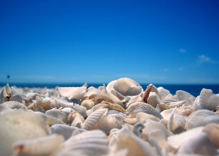 3925073_shellbeach6 (700x499, 60Kb)