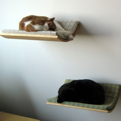 cat_shelf (468x468, 29Kb)