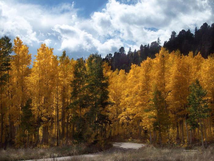 autumn-splendor-carol-cavalaris (700x525, 99Kb)