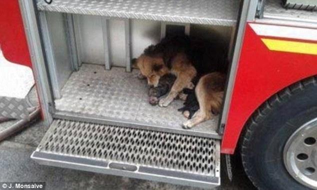 Save_dog_01 (634x379, 38Kb)