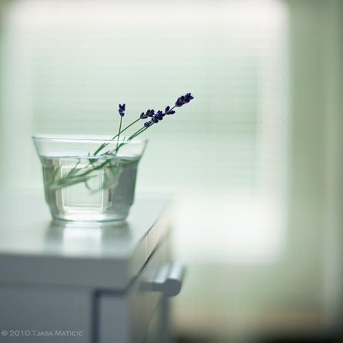 Нежное макро-фото от фотографа Tjasa Maticic 3 (500x500, 79Kb)