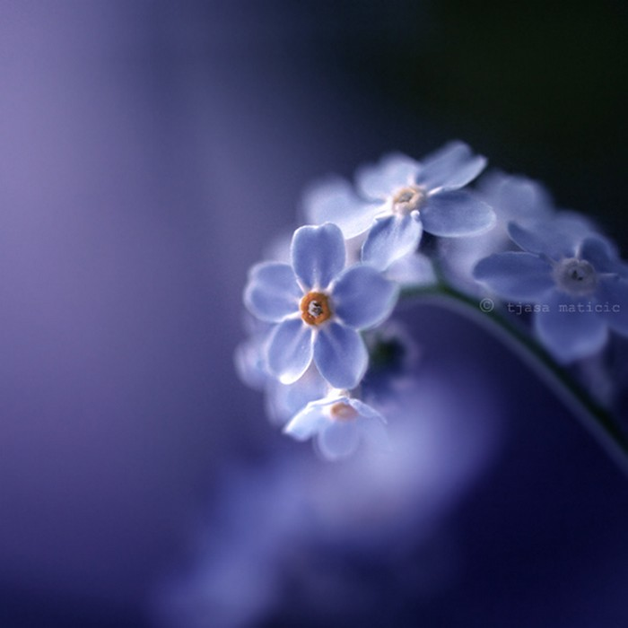 Нежное макро-фото от фотографа Tjasa Maticic 15 (700x700, 52Kb)