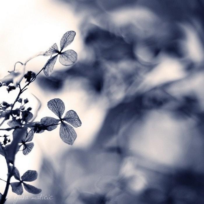 Нежное макро-фото от фотографа Tjasa Maticic 33 (700x700, 84Kb)