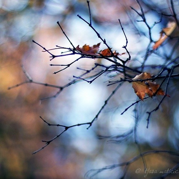 Нежное макро-фото от фотографа Tjasa Maticic 35 (700x700, 99Kb)