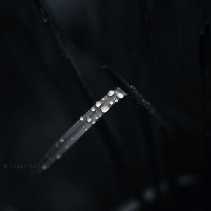 Нежное макро-фото от фотографа Tjasa Maticic 43 (700x700, 38Kb)