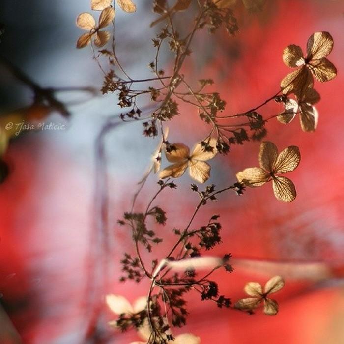 Нежное макро-фото от фотографа Tjasa Maticic 49 (700x700, 98Kb)