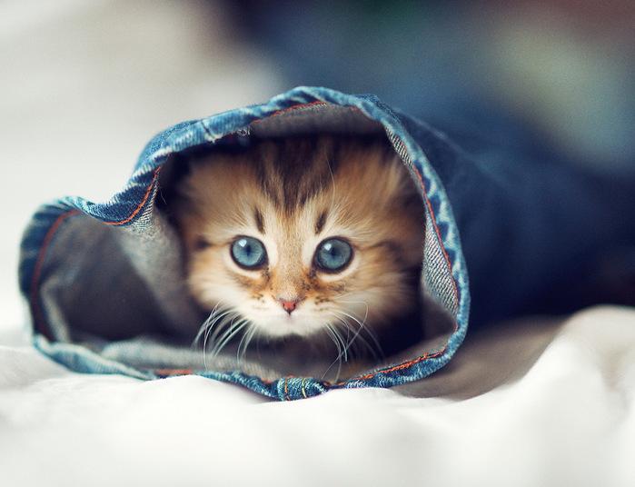Daisy_kitten_1 (700x536, 93Kb)