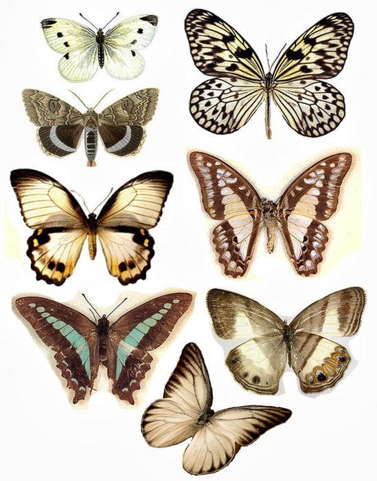 1324702035_55_FT838_august_2010_butterflies_ (549x700, 103Kb)